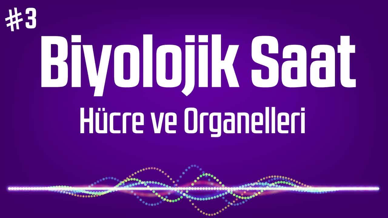 Hücre ve Organelleri – TYT Biyoloji Podcast